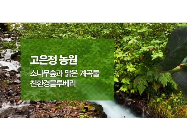 무농약블루베리고은정농원1.jpg
